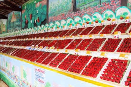 Festa de Flores e Morangos de Atibaia: O morango é o rei!