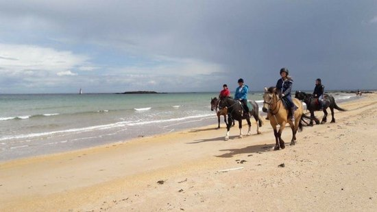 Seacliff Stables: Memorable morning
