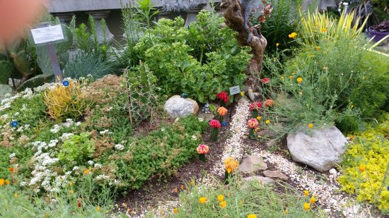 Lake Lure Flowering Bridge: Small Cactus Garden
