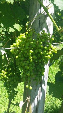Turdo Vineyards & Winery: 20160702_141200_large.jpg