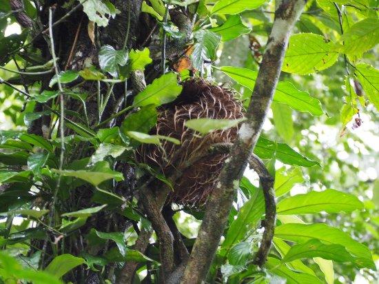 Napo Wildlife Center Ecolodge: Three toed sloth