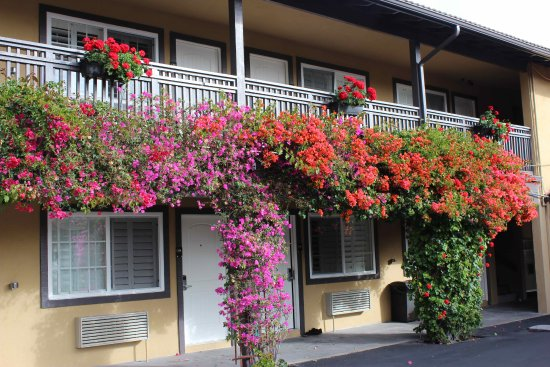 Super 8 Monterey/Carmel: Flowers, flowers everywhere