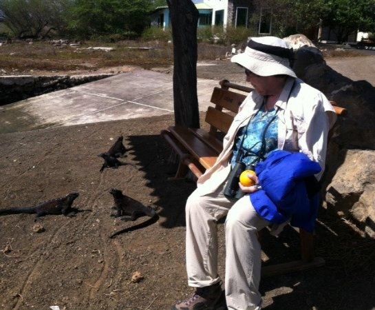 Floreana, Ecuador: Visitor and marine iguanas at Puerto Velasco Ibarra