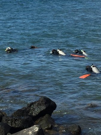 Fathom Five Divers : photo3.jpg