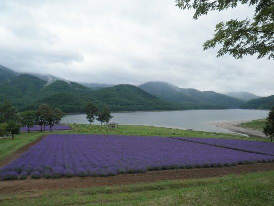 Minamifurano-cho, Nhật Bản: 公園の前のラベンダー