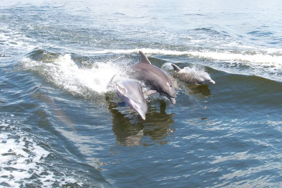 These Dolphins Loved Swimming And Jumping The Waves