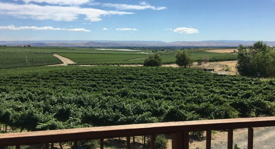Zillah, WA: View of vineyards and mountains in the distance