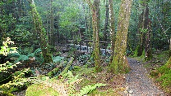 St Columba Waterfall: The bridge on the track to Ralphs falls.
