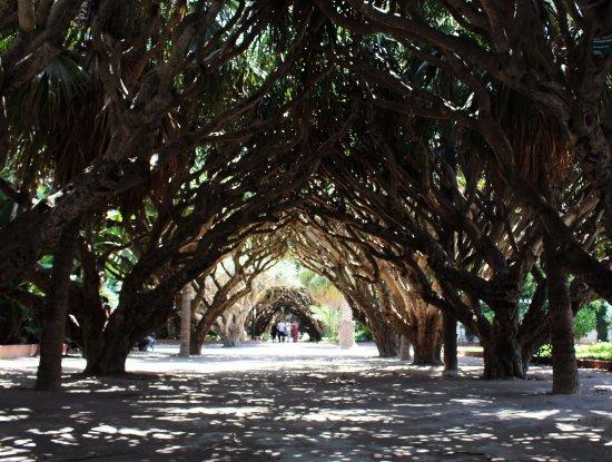 Algiers, Algeria: Jardin d'essai du Hamma