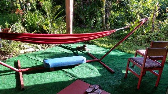 Pahoa, HI: Community cat visits every morning outside