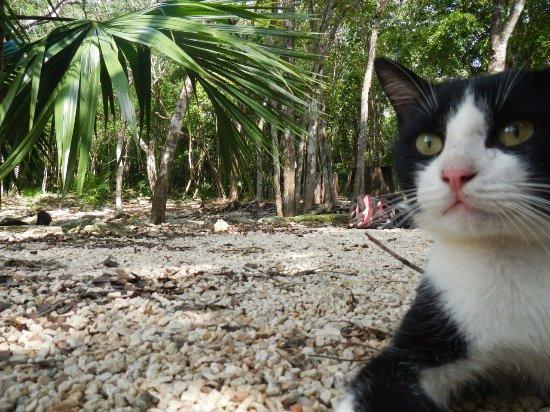 Cenote Crystal: Local cat friend