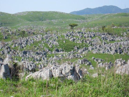 Akiyoshidai Karst Observatory : 草原をぐるっとめぐる遊歩道がついています。
