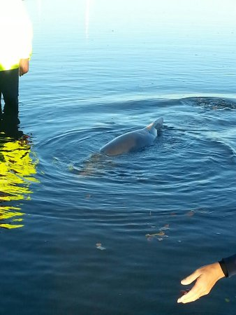 dolphin feeding - Picture of Barnacles Dolphin Centre, Tin ...