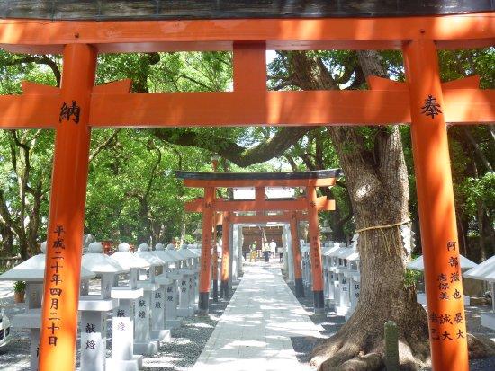 Izumi, Japón: 境内の鳥居