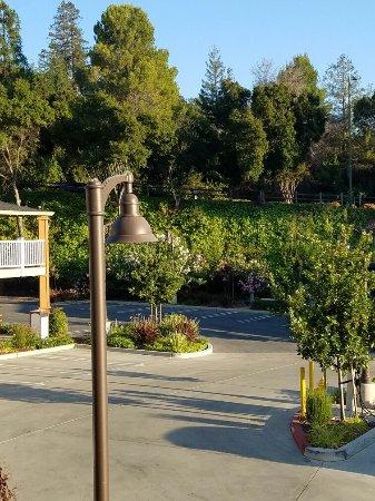 Los Gatos, CA: 20160702_192818_large.jpg