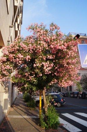 Hotel Regent Roma: Вокруг отеля масса цветущих растений