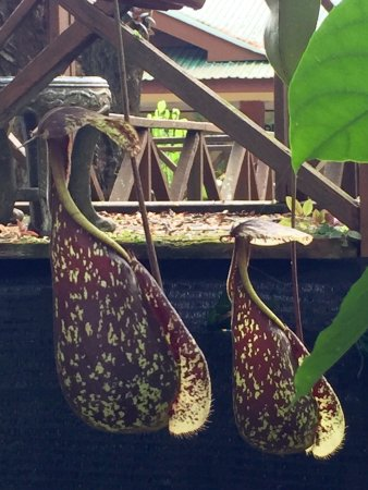 Pitcher Plants Garden