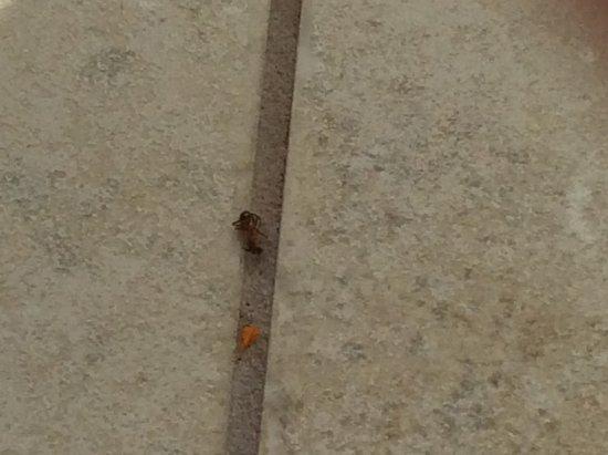 إزلاندر ريزورت إسلامورادا: Spider or bug, idk?