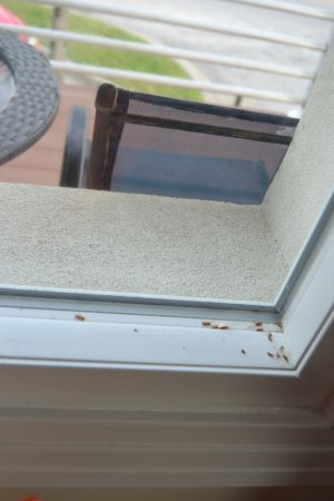 Magic Beach Motel: dead bugs in the window sill....also found a dead bug in the bathroom