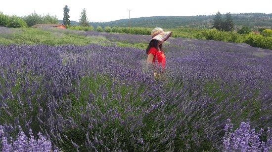 Sparkling Hill Resort: Green man lavender farm