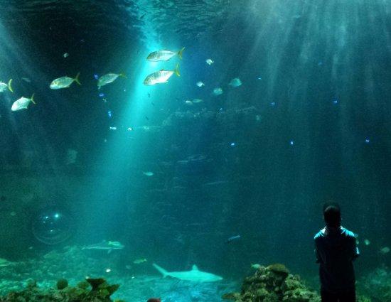 tropen aquarium ein riesen aquarium bild von tierpark hagenbeck hamburg tripadvisor. Black Bedroom Furniture Sets. Home Design Ideas