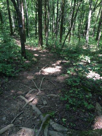 Burns, TN: Pic taken on Wildcat Trail.