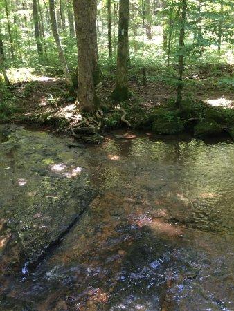 Burns, TN: Creek to cross on Wildcat Trail. :)