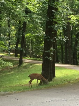 Burns, TN: A doe spotted shortly after entering the park.