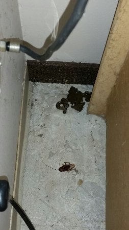 Home-Towne Studios Gautier: Dead roaches in bathroom, bedroom,  and barren kitchen.