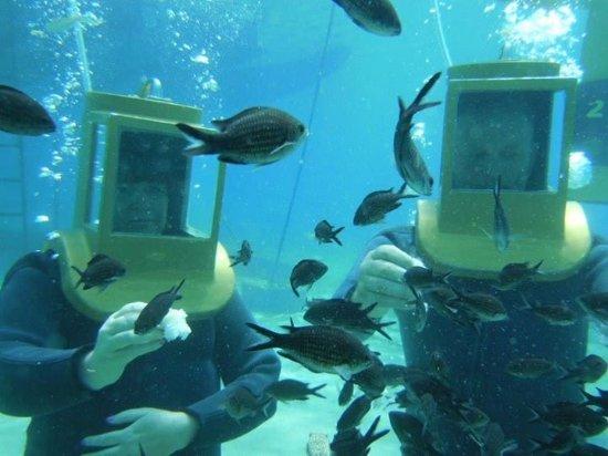 Sunrise Beach Hotel: Walking on the sea bed feeding the fish, Amazing