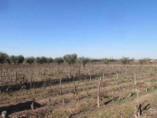 Bodega Lagarde: viña