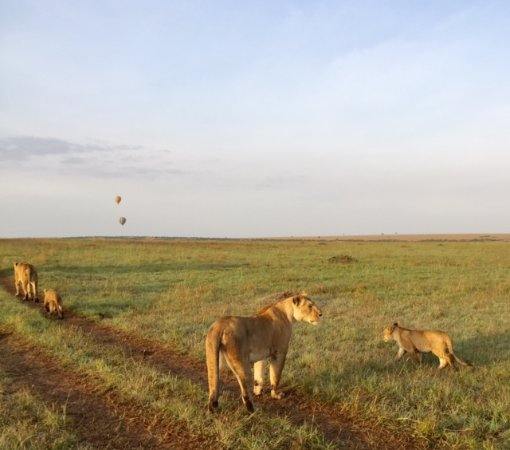 TrueAfrica - The Safari Company Day Tours: A beautiful sighting on one of our morning drives.