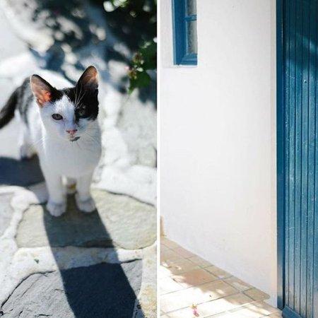 Villa Ippocampi: cat