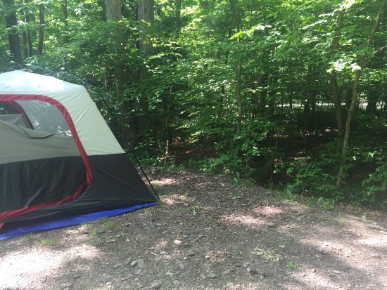 Allegany State Park Campground Resmi