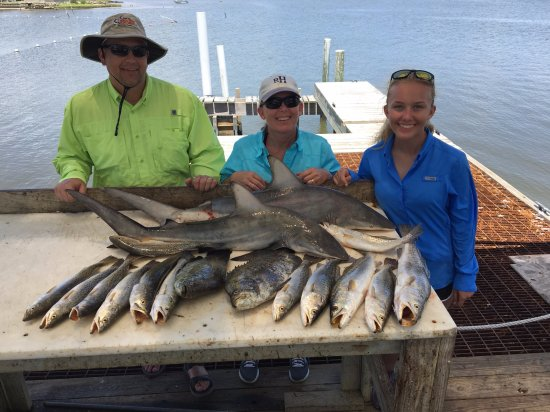 Sea trout triple tail shark june 2016 picture of for Cedar key fl fishing