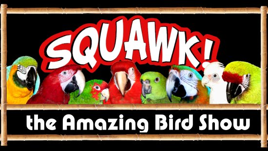 ‪SQUAWK! the Amazing Bird Show‬