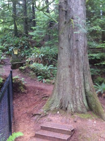 Port Ludlow, WA: Forest trail loops