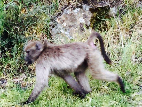 uKhahlamba-Drakensberg Park, África do Sul: photo1.jpg
