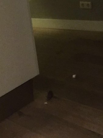 PH Apartment Suites: A friend decided to join us 🐁