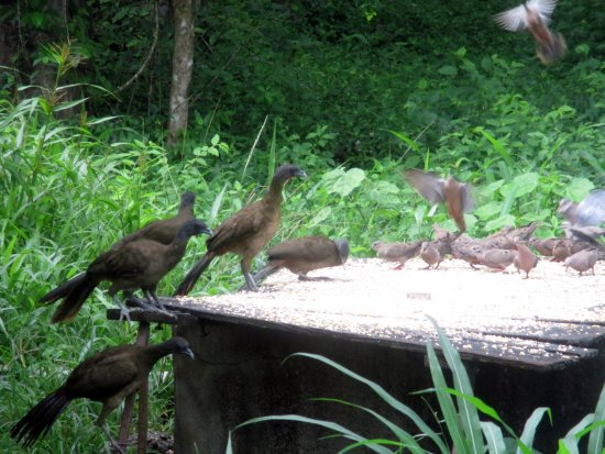 Grafton Caledonia Wildlife Sanctuary : more birds coming