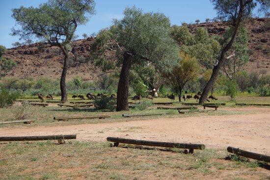 """Broken Hill, Australien: Emu """"creche"""""""