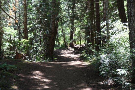 Hornby Island, Canada : Wooded area
