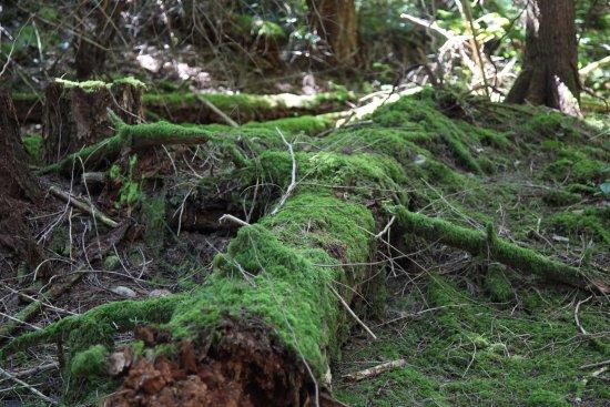 Hornby Island, Canada : Natural regeneration