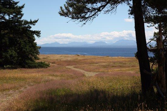 Hornby Island, Canada : Coastal grassland over cliffs