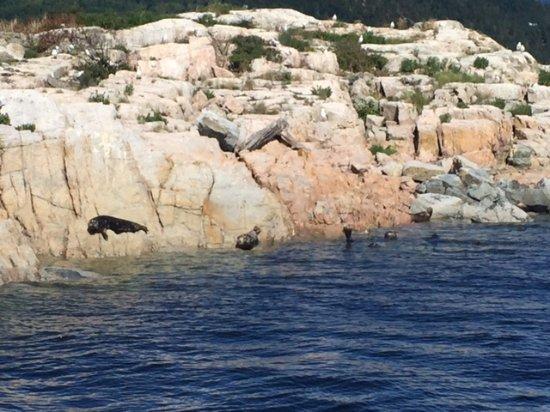 Lund, Kanada: Seals!