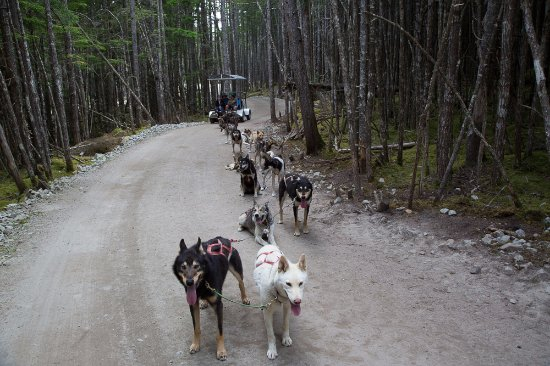 Iditarod Dog Training Camp