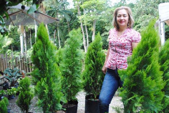 Exuberantes pinos del vivero fotograf a de jardin for Viveros medellin