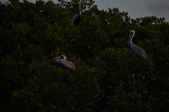 Boca Chica, Panamá: arrangement's can be made for various tour including sunset mangrove lagoons.