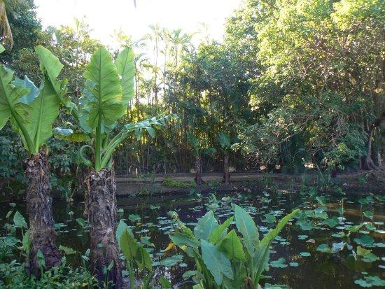 Palmiers picture of jardin d 39 eden saint gilles les for Jardin d eden