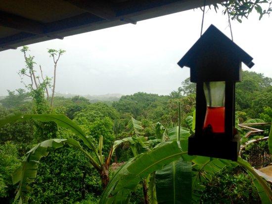 Villa Mango: Views